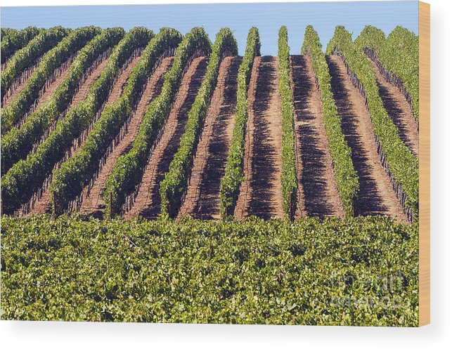Napa Valley California Wineries Winery Grapevine Grapevines Row Rows Landscape Landscapes Plant Plants Vineyard Vineyards Wood Print featuring the photograph Vineyard Rows by Bob Phillips