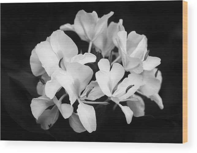 White Ginger Flowers H Coronarium Painted Bw Wood Print By Rich Franco
