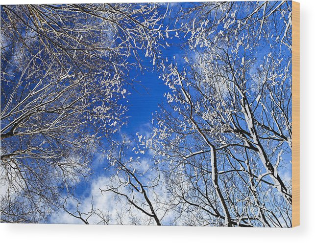 Winter Wood Print featuring the photograph Winter Trees And Blue Sky by Elena Elisseeva
