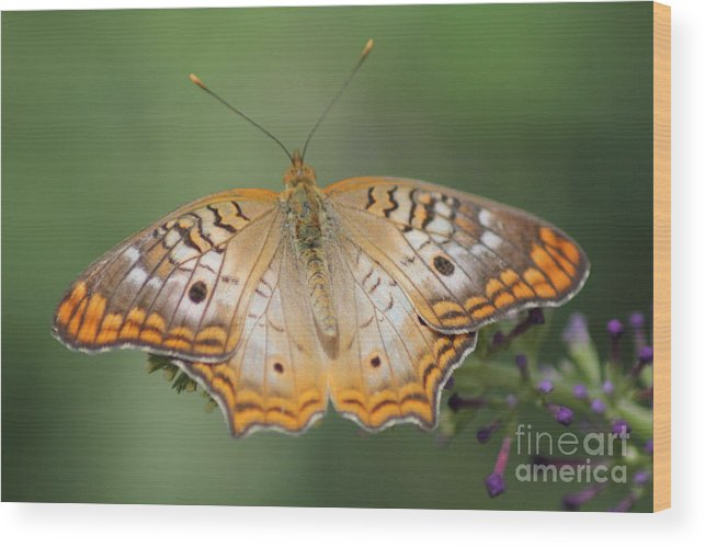 Butterfly Wood Print featuring the photograph Butterfly by Diane Greco-Lesser