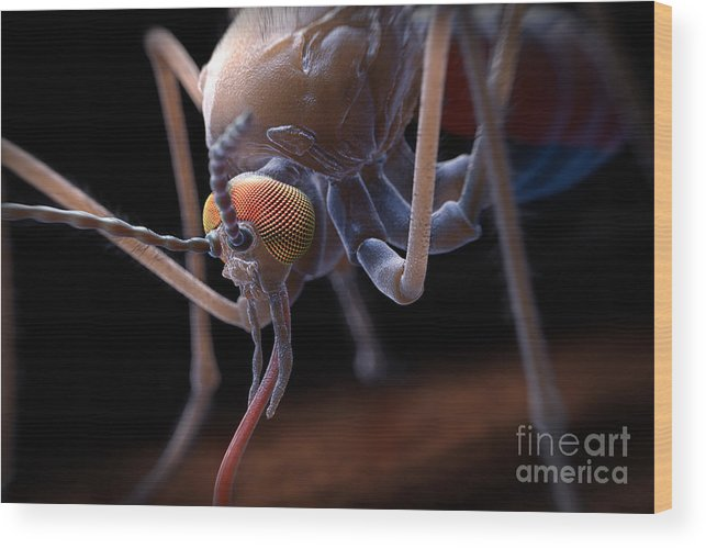 3d Visualisation Wood Print featuring the photograph Anopheles Mosquito by Science Picture Co