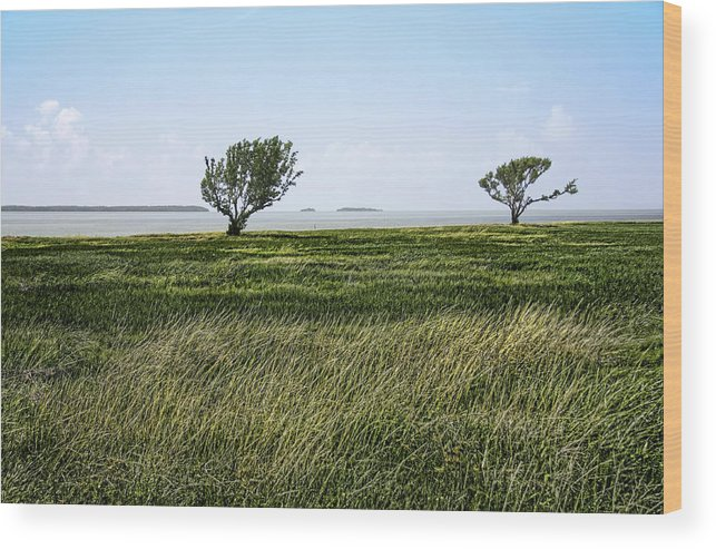 Atlantic Wood Print featuring the photograph Florida Bay Everglades by Rudy Umans
