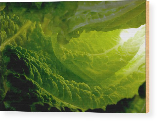 Lettuce Wood Print featuring the photograph Inside A Lettuce Leaf by Linda Mcfarland