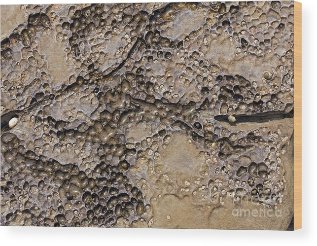 Dolostone Wood Print featuring the photograph Patterns In Dolostone Coastal Rocks by Dr Keith Wheeler