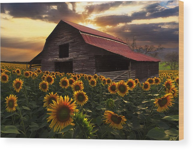 Appalachia Wood Print featuring the photograph Sunflower Farm 2 by Debra and Dave Vanderlaan