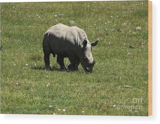 Rhinoceros Wood Print featuring the photograph White Rhinoceros Calf by Aidan Moran