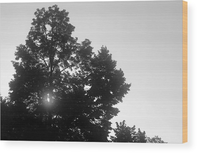 Nature Wood Print featuring the photograph Untitled by Adam Barone