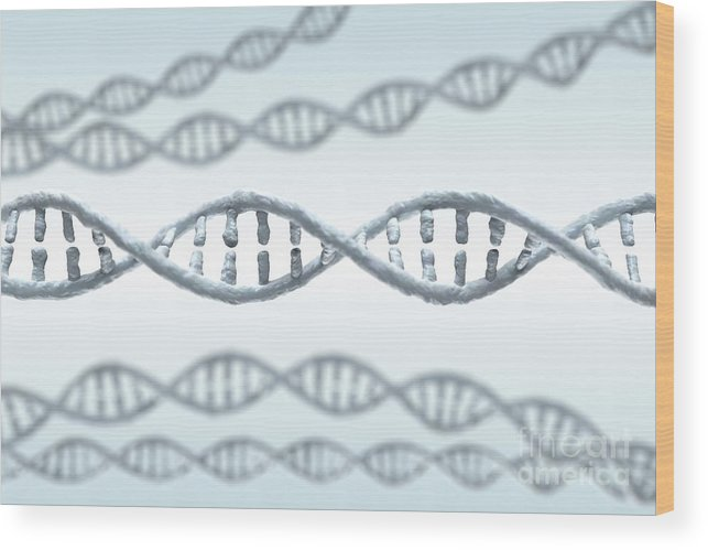 Digitally Generated Image Wood Print featuring the photograph Dna Strands by Science Picture Co