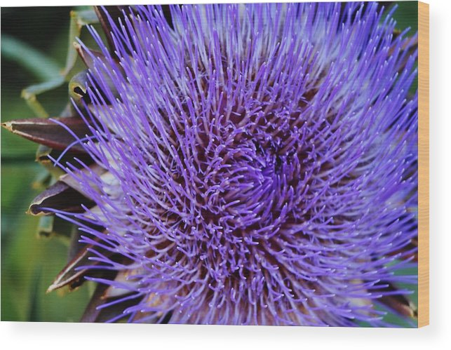 Barcelona Wood Print featuring the photograph Purple Flower by Christopher Hoffman