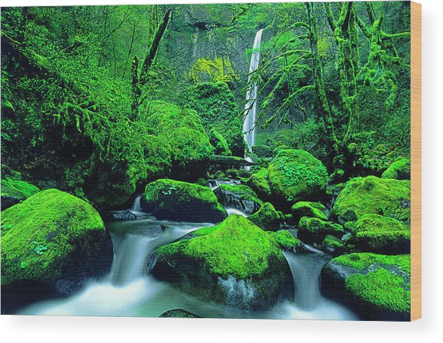 Animal Wood Print featuring the photograph Usa, Oregon, Columbia River Gorge by Jaynes Gallery