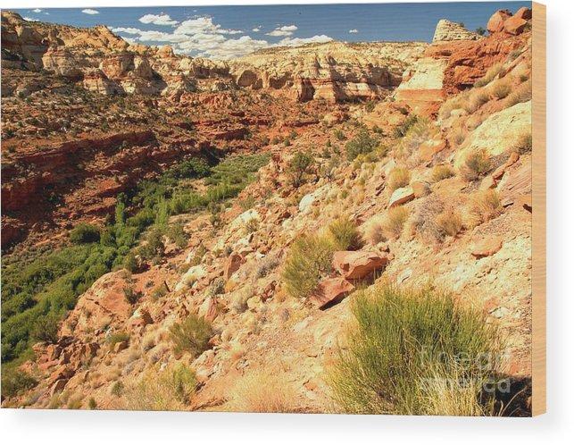 Calf Creek Falls Wood Print featuring the photograph Calf Creek Falls Canyon by Adam Jewell