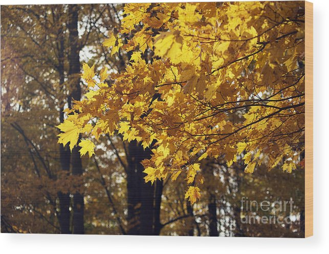 Yellow Wood Print featuring the photograph Fall Yellow by Elaine Mikkelstrup