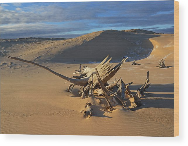 Beautiful Wood Print featuring the photograph Silver Lake Sand Dunes by Dean Pennala