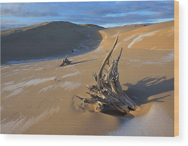 Wood Print featuring the photograph Silver Lake Sand Dunes by Dean Pennala