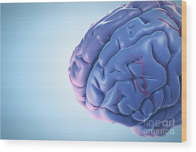 Close Up Wood Print featuring the photograph Human Brain by Science Picture Co
