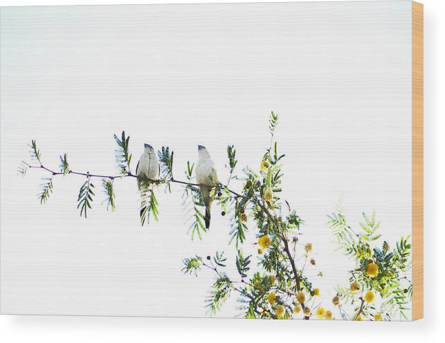 Birds Wood Print featuring the photograph Birds by Anusha Hewage