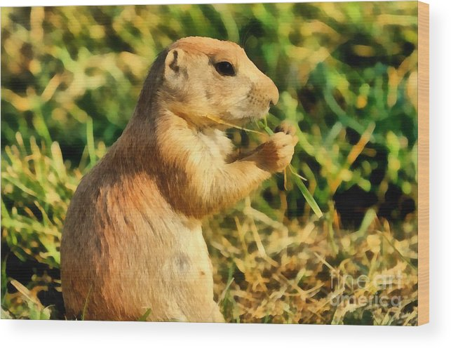 Black-tailed Prairie Dog Wood Print featuring the painting Black-tailed Prairie Dog by George Atsametakis
