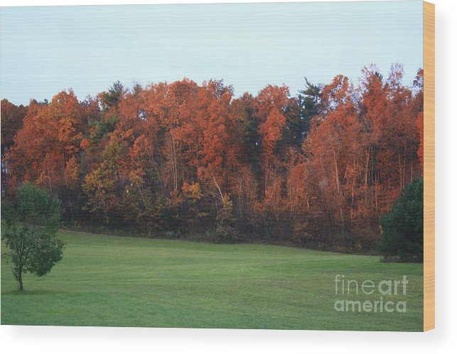 Fall Landscape Wood Print featuring the photograph Landscape by Arelys Jimenez