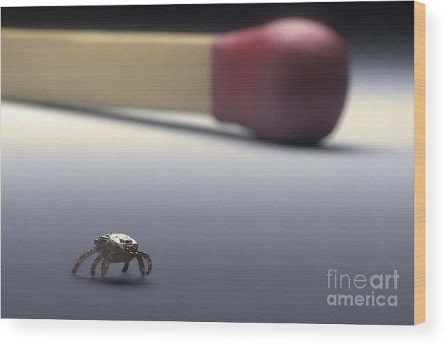 Digitally Generated Image Wood Print featuring the photograph Scale Comparison Of A Tick by Science Picture Co