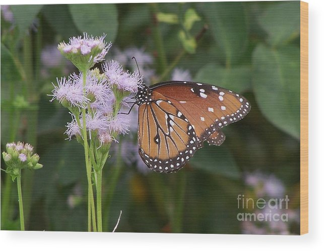 Flower Wood Print featuring the photograph Butterfly by Randy Mass