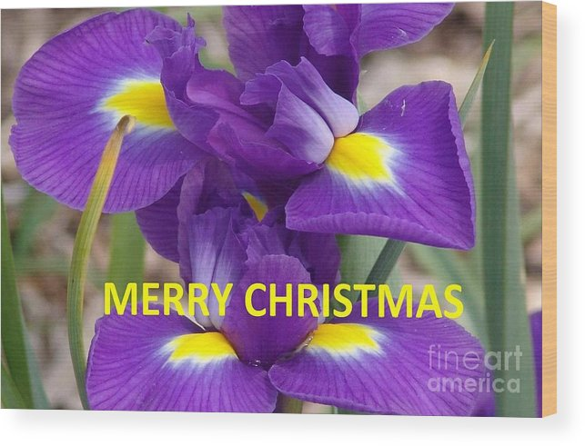 Purple Iris Wood Print featuring the photograph Christmas Card by Rod Ismay