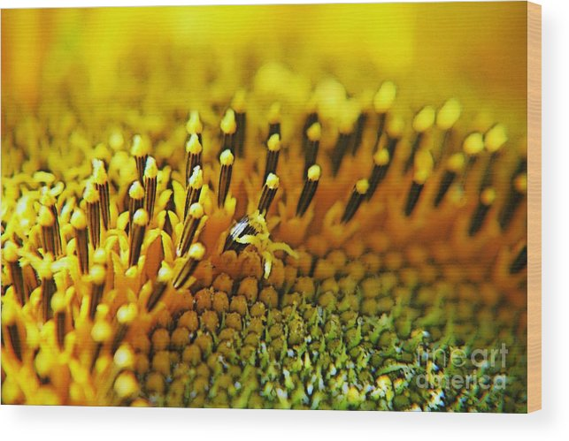 Sunflower Wood Print featuring the photograph Untitled by Gluca Pagnini