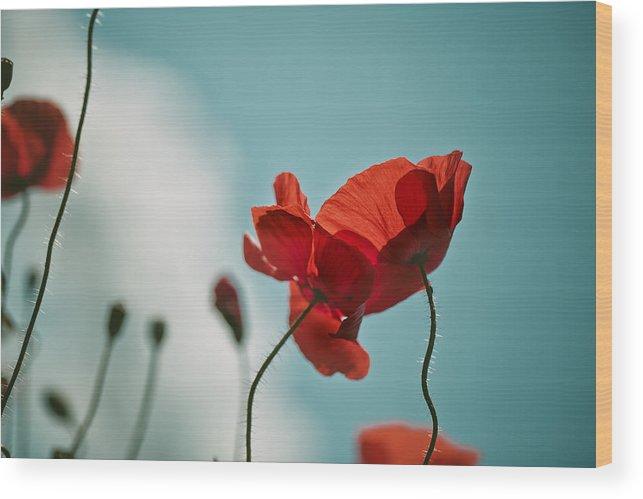 Poppy Wood Print featuring the photograph Poppy Meadow by Nailia Schwarz