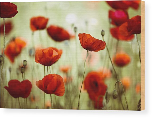Poppy Wood Print featuring the photograph Summer Poppy 8 by Nailia Schwarz