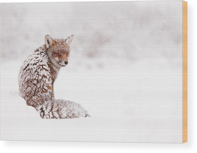 Fox Wood Print featuring the photograph A Red Fox Fantasy by Roeselien Raimond