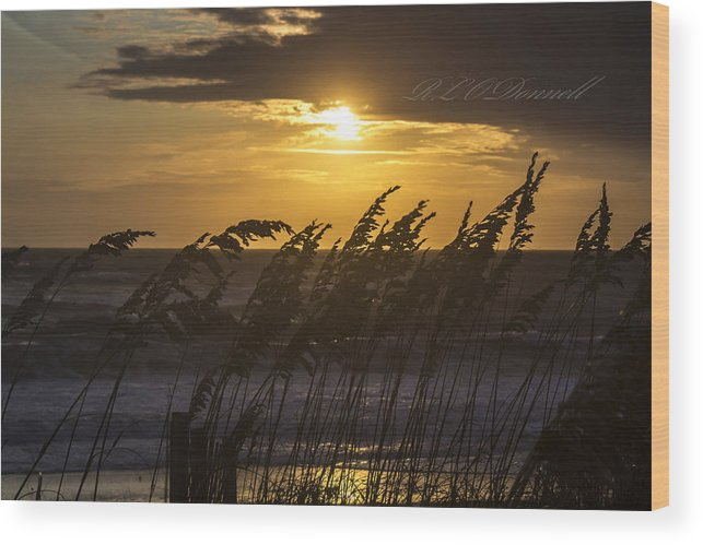 Beach Wood Print featuring the photograph A Golden Sunrise by Rhonda ODonnell