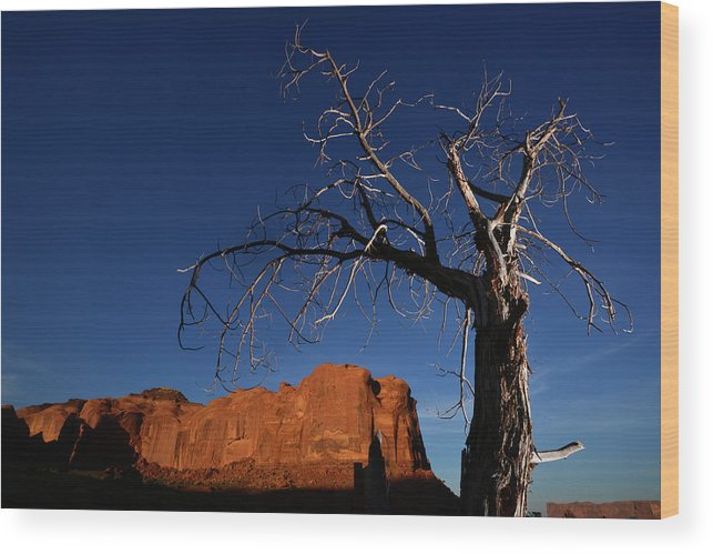 Color Image Wood Print featuring the photograph A Mesquite Trees And Buttes by Raul Touzon