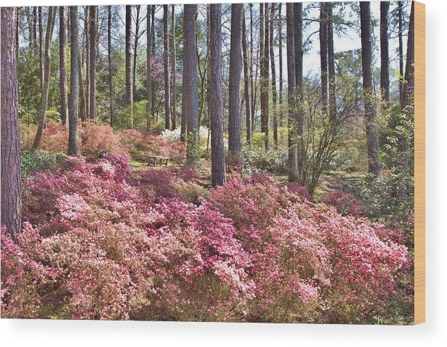 8211 Wood Print featuring the photograph A Quiet Spot In The Woods by Gordon Elwell