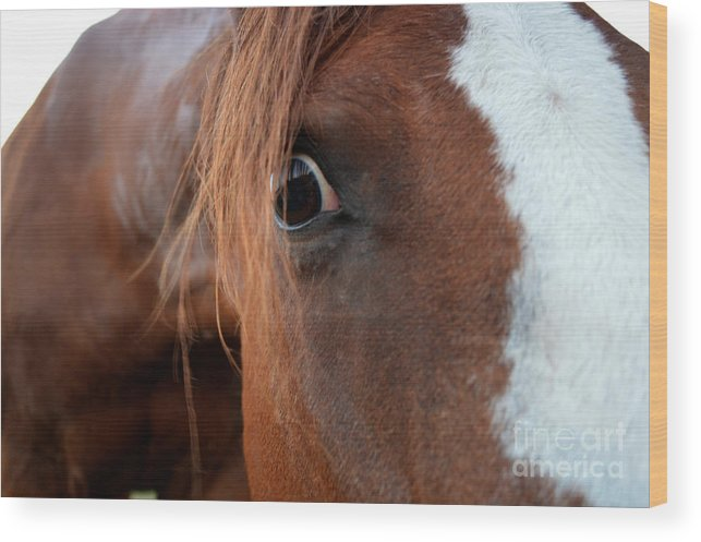 Horse Wood Print featuring the photograph A Sweetheart's Hello by Catherine Peterson