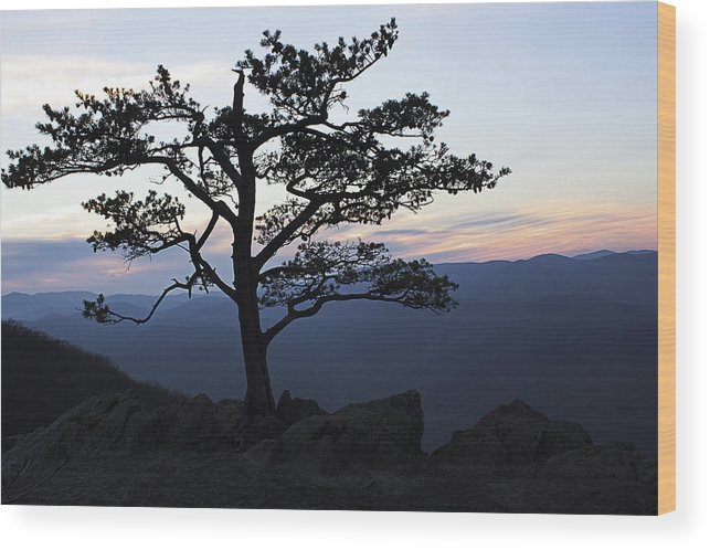 Tree Wood Print featuring the photograph A Tree Of Mountains by Kari Watson