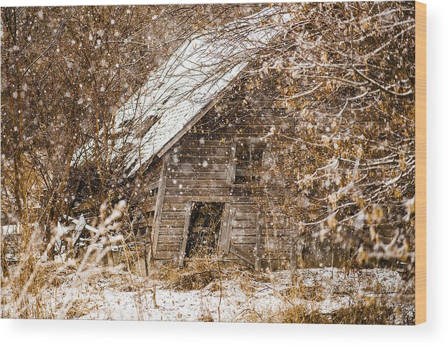 Barns Wood Print featuring the photograph A Winter Shed by Edward Peterson