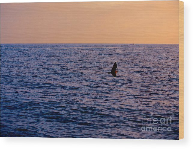 Bird Wood Print featuring the photograph Above The Water by Loretta Jean Photography