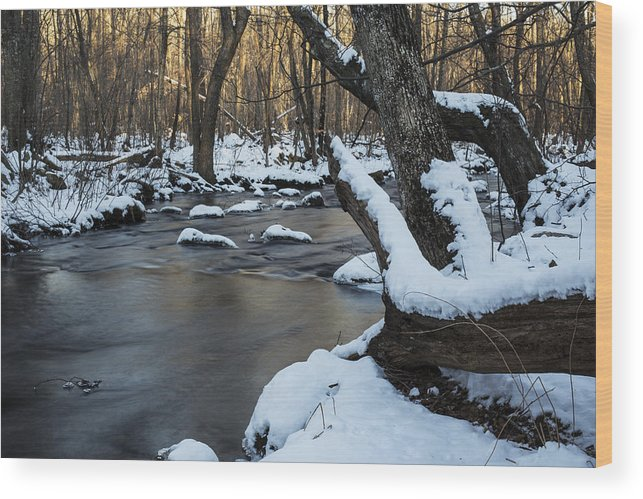 Andrew Pacheco Wood Print featuring the photograph Adamsville Brook by Andrew Pacheco