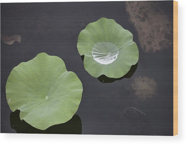 Rain Wood Print featuring the photograph After The Rain- Gungarre Billabong by Douglas Barnard