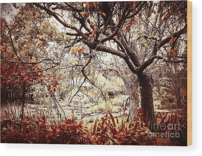 Vintage Wood Print featuring the photograph Aged Garden by Phill Petrovic
