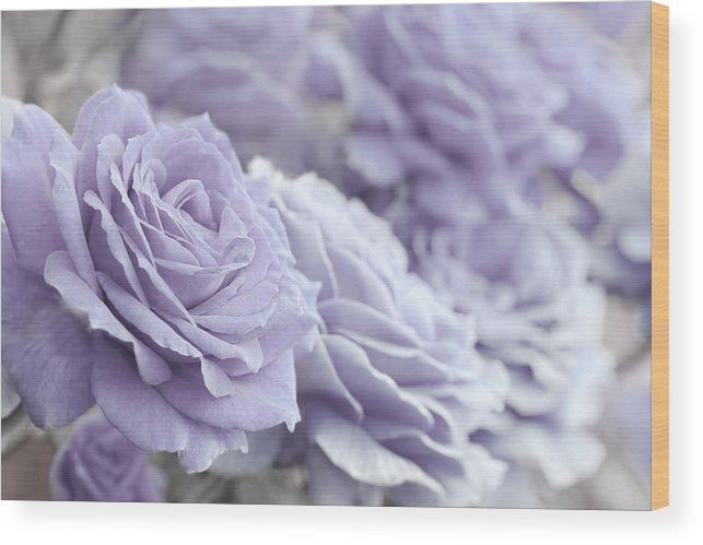 Rose Wood Print featuring the photograph All The Lavender Roses by Jennie Marie Schell