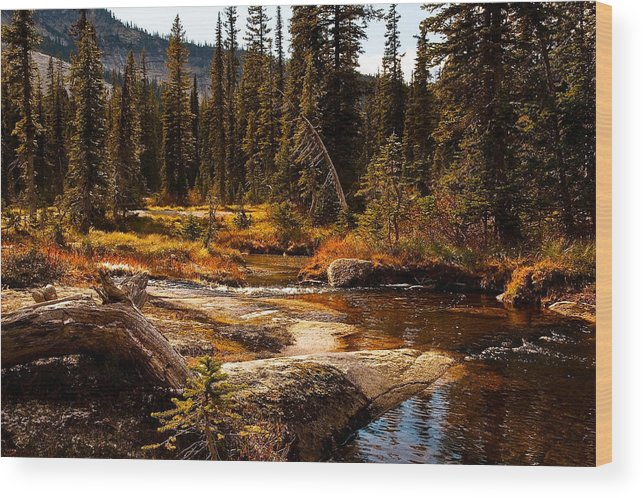 Alpine Meadow Wood Print featuring the photograph Almost Perfect by Randolph Fritz