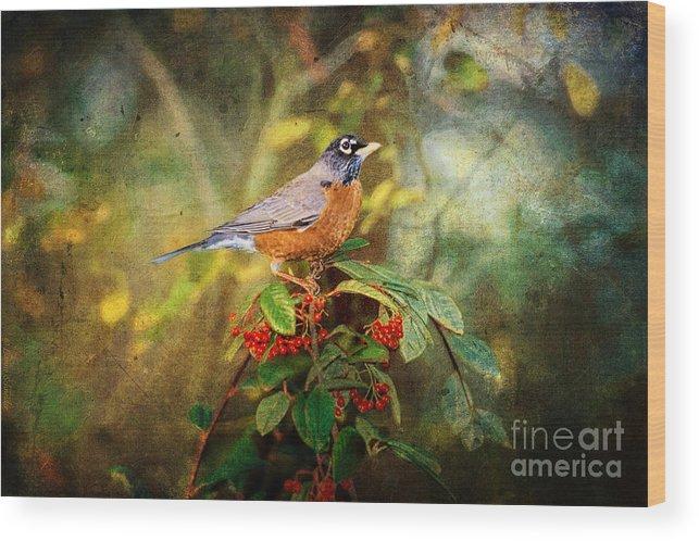 Robin Wood Print featuring the digital art American Robin - Harbinger Of Spring by Lianne Schneider