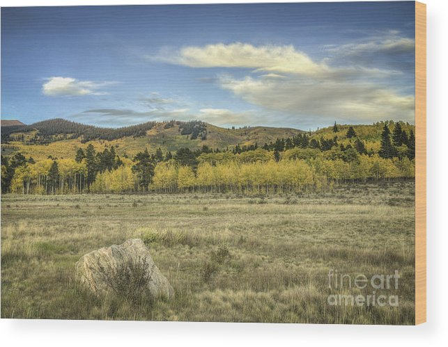 Aspen Fall Color Wood Print featuring the photograph Aspen And Boulder by David Waldrop