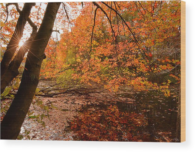 Rhode Island Wood Print featuring the photograph At Its Best by Lourry Legarde