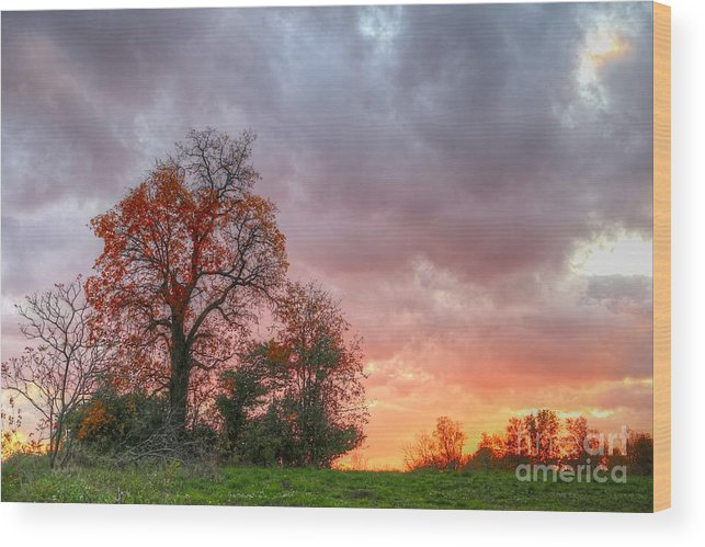 Autumn Wood Print featuring the photograph Autumn Blaze by Steve Ratliff