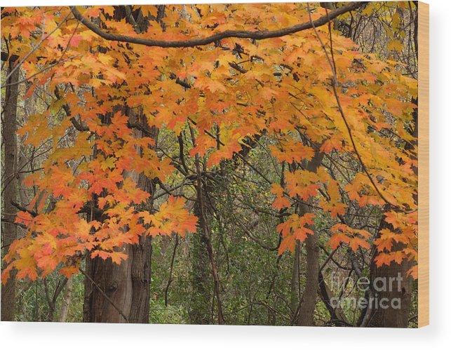 Illinois Wood Print featuring the photograph Autumn Canopy by Deborah Smolinske
