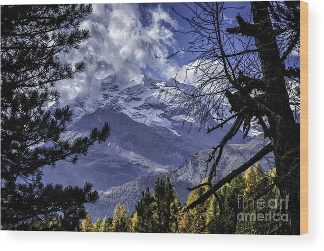 Pontresina Wood Print featuring the photograph Autumn In The Alps 3 by Timothy Hacker