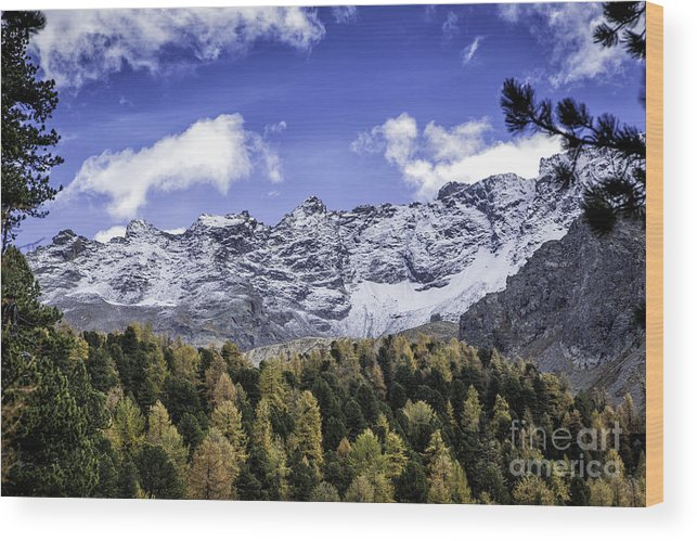 Pontresina Wood Print featuring the photograph Autumn In The Alps by Timothy Hacker