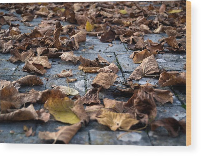 Autumn Wood Print featuring the photograph Autumn Leaves by Orazio Puccio