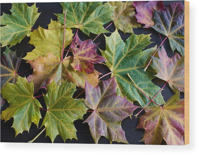Maple Wood Print featuring the photograph Autumn Maple Leaves by Frank Gaertner